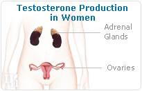 Testosterone production in women