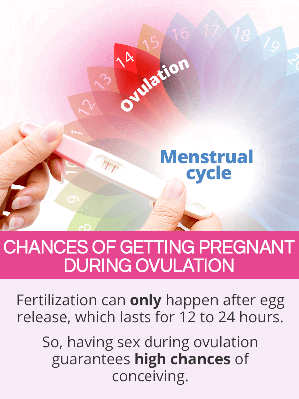 Pregnancy Chances during Ovulation