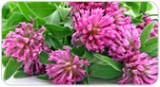 the-natural-wayusing-homeopathy-treat-hormonal-imbalance-2
