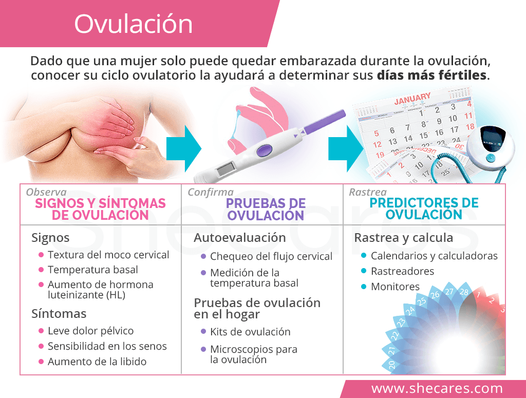 Ovulación