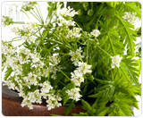 Phytoestrogenic herbs treat hormonal imbalance by introducing plant-based estrogens.