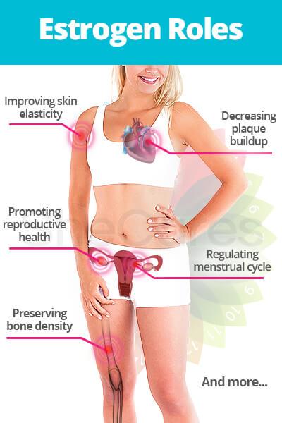 Estrogen Roles
