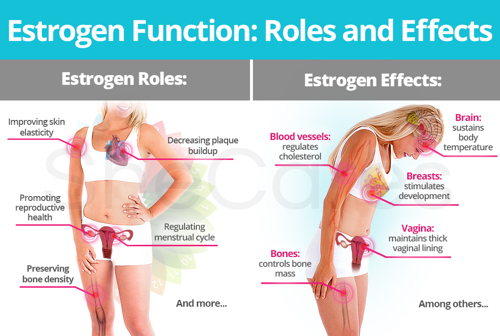 Estrogen Role and Effects