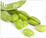 Soy is a herb supplement of estrogen.