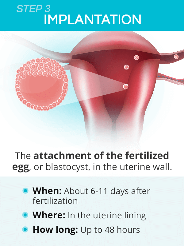 How long after conception is implantation