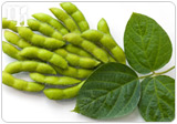 Soy can combat menopause symptoms
