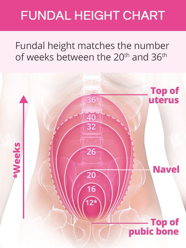 Normal Fundal Height