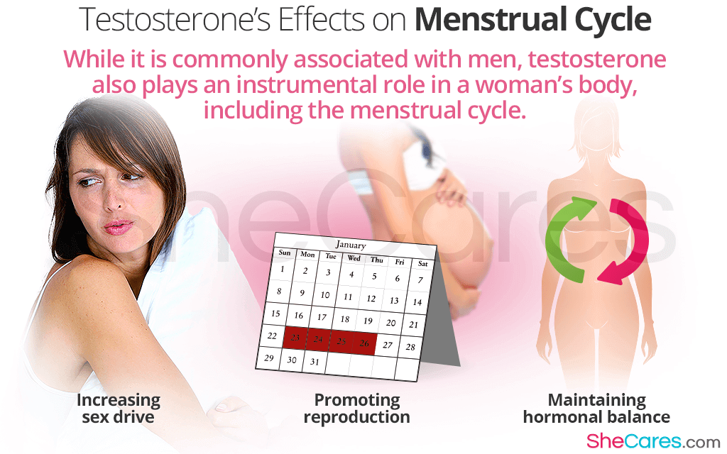 Commonly associated with men, high testosterone levels are also linked to female reproductive health.