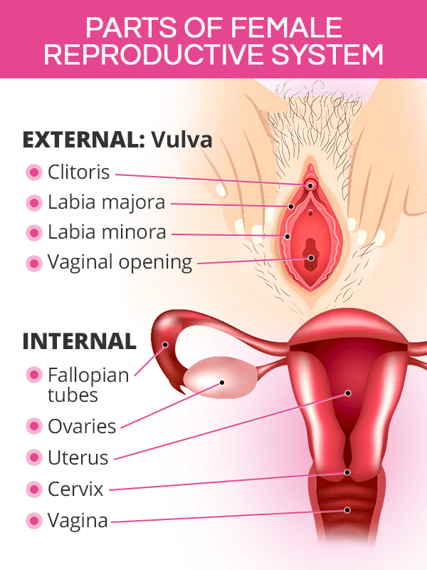 Parts of female reproductive system