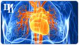 estrogen heart