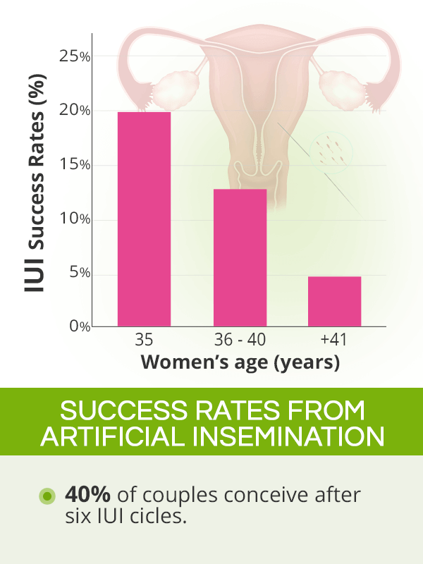 Artificial insemination success rates