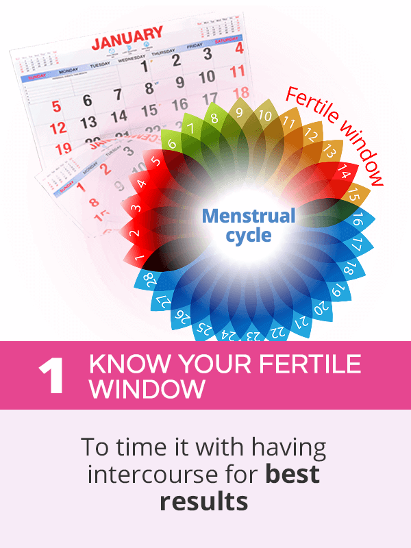 Know your fertile window to get pregnant fast