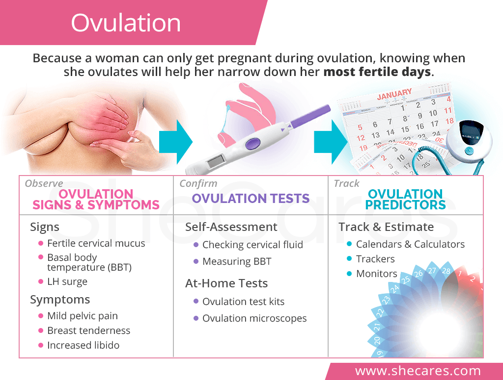 Can you only get pregnant when ovulating