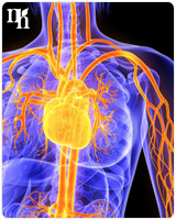 HRT could increase rates of heart diseases