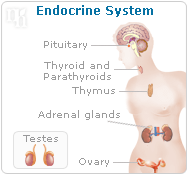 The endocrine system has glands that secrete hormones into the blood stream.