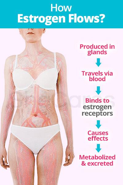 Estrogen Flow