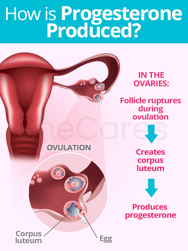 How is Progesterone Produced