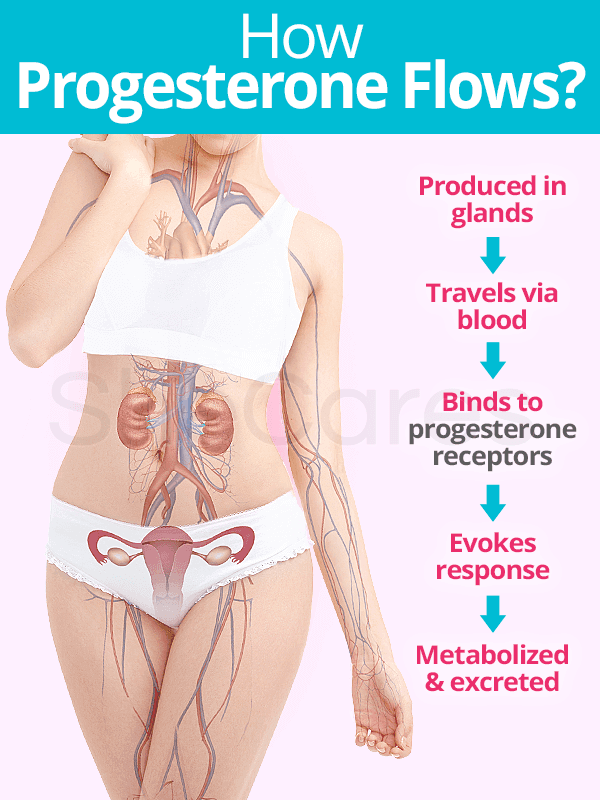 How progesterone flows