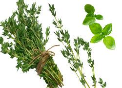 Non Estrogenic Herbs