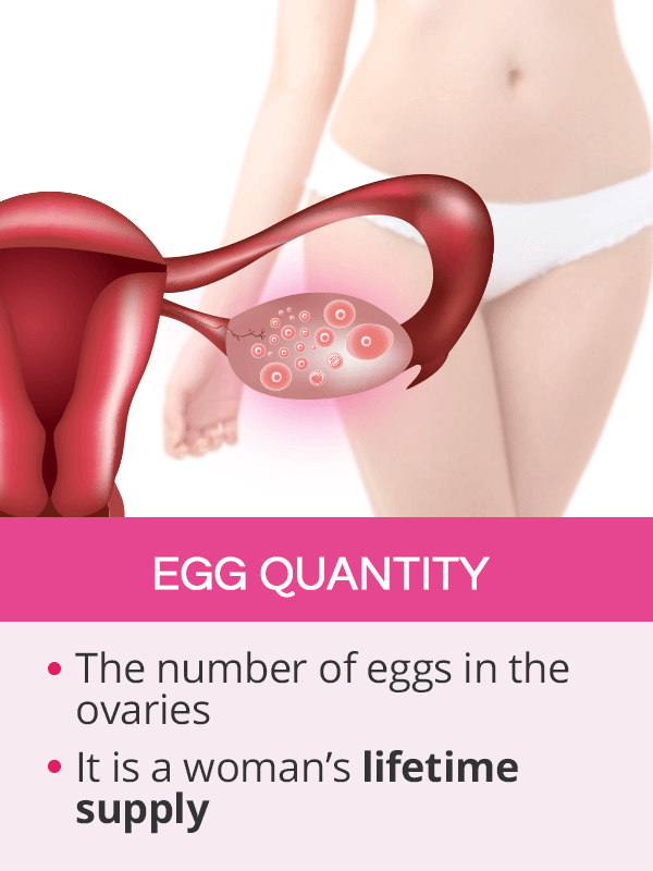 Egg quantity
