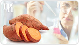 Bioidentical cream is made from wild Mexican yams.