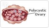 Copywriters of natural hormones