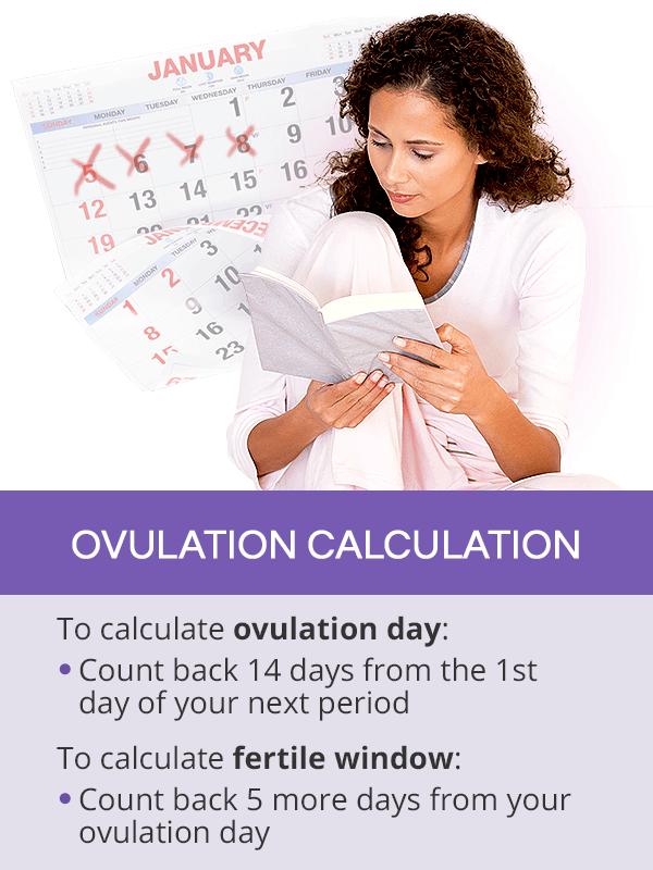 Ovulation calculation