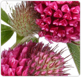 Herbal remedies have the ability to regulate your unstable hormone levels