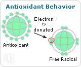 Estrogen as an Antioxidant-1