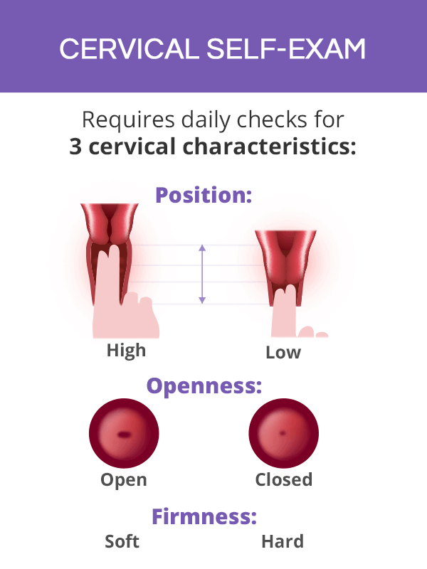 cervical self exam