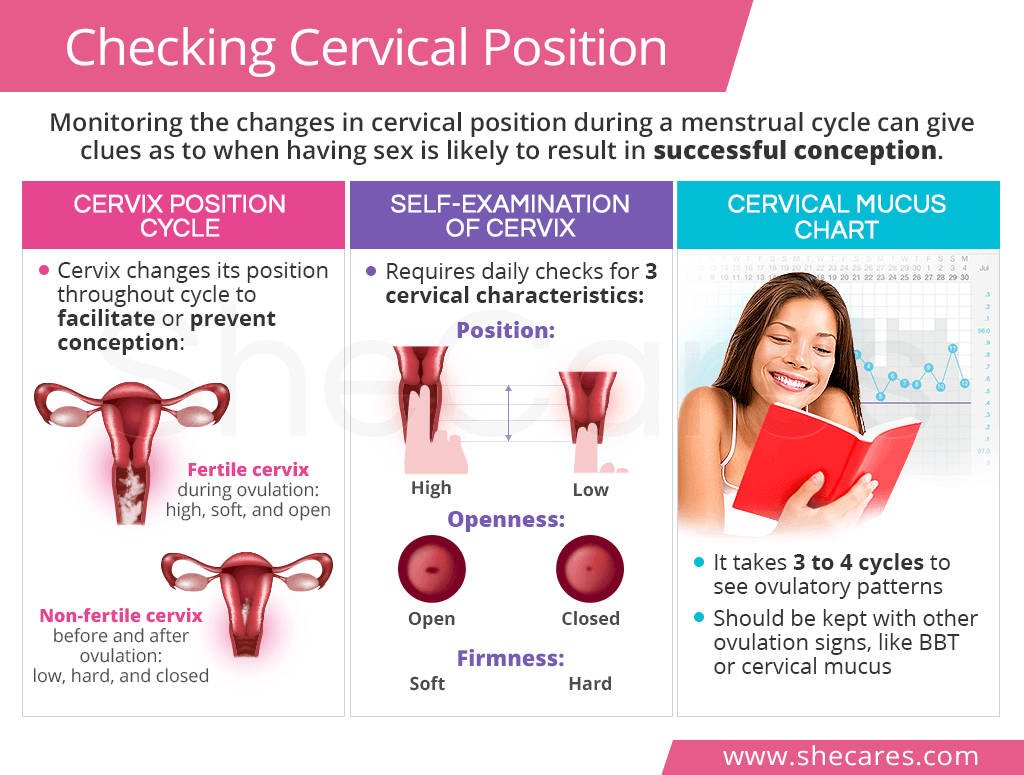 Checking Cervical Position | SheCares