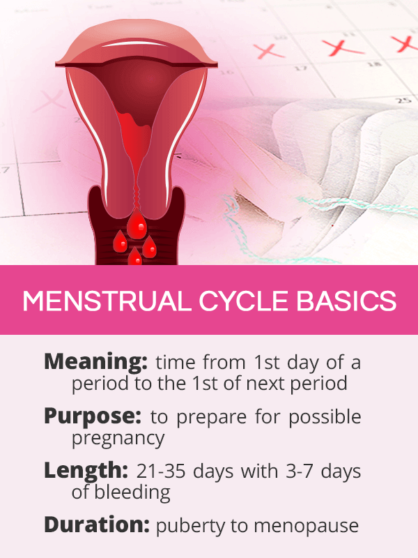 Menstrual cycle basics