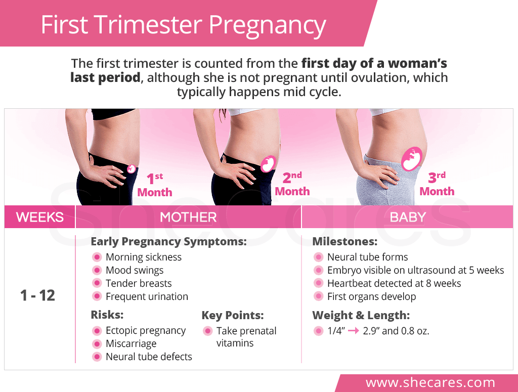 First Trimester Pregnancy