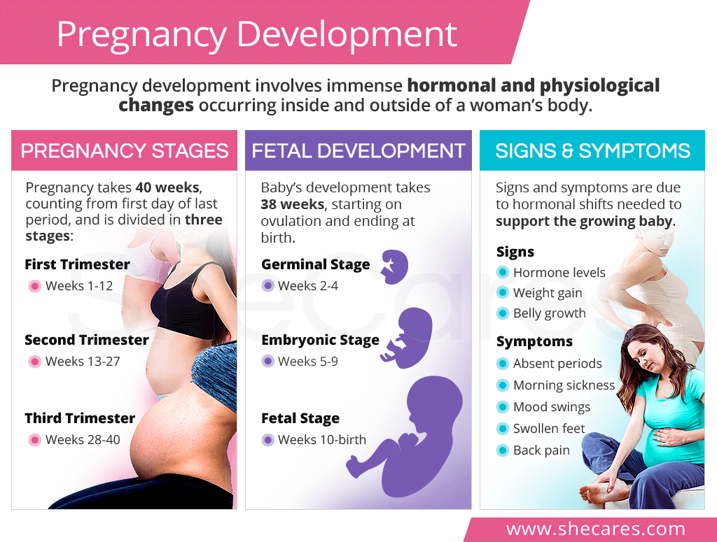 Pregnancy development
