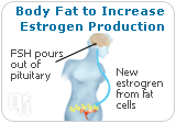 The body learns to convert more calories into fat to increase estrogen production