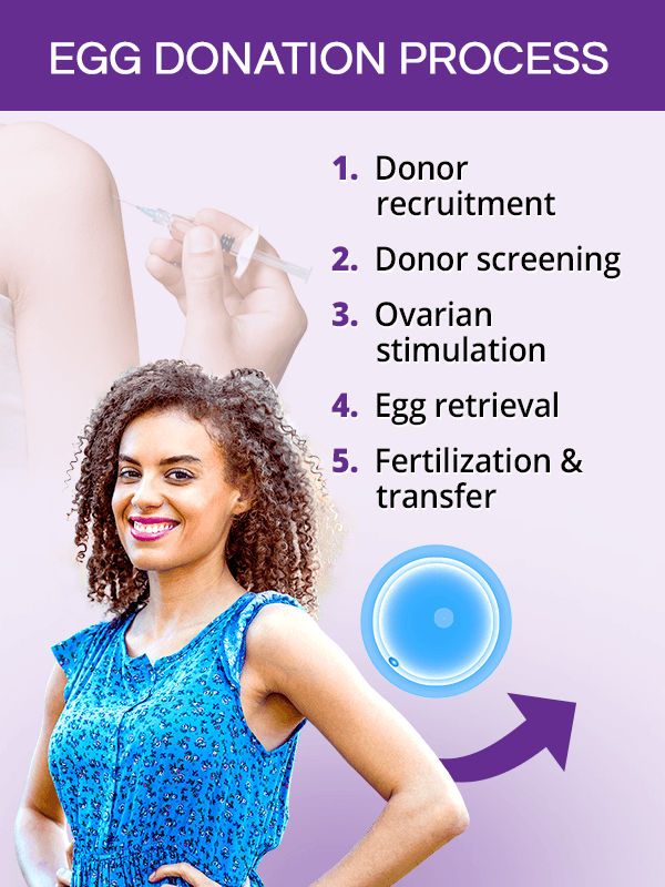 Egg donation process