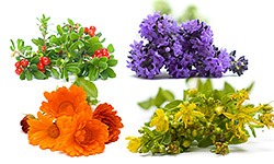 Types of Herbs for Relieving Menopause Symptoms