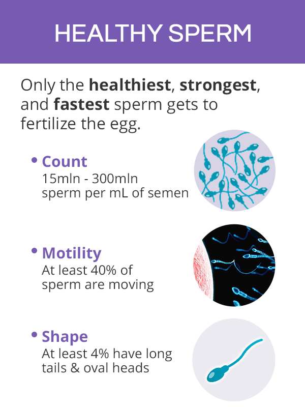 Sperm motility, count, and shape