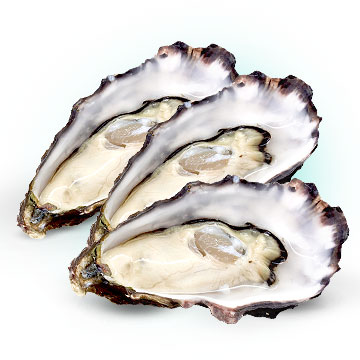 Oysters to get pregnant fast