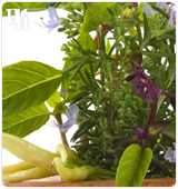 Herbal remedies help treating declining estrogen levels