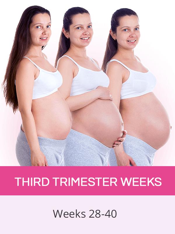 Third trimester weeks