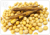 Soy contains estrogen-like substances known as phytoestrogens
