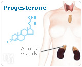 After menopause, progesterone is made by the adrenal glands and fat cells